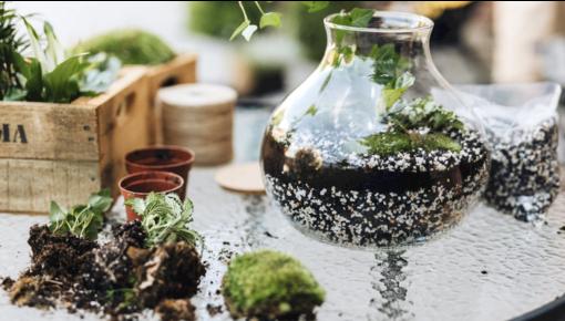 So bauen Sie Ihr eigenes Pflanzenterrarium