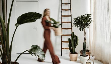 Des mouches sur vos plantes ?