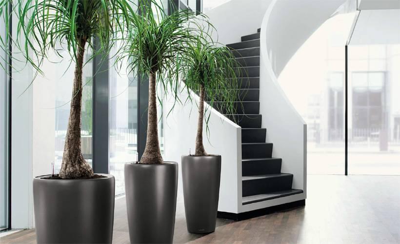 Plantes de bureau