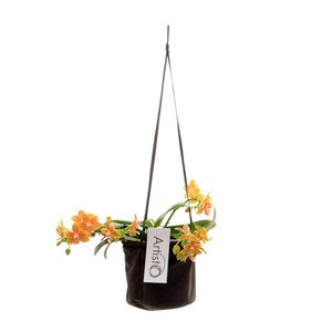 Phalaenopsis Art Modern 4 tak