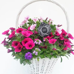 Hanging Baskets in white handle basket