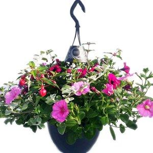Perkgoed Hanging Basket easy in hangpot