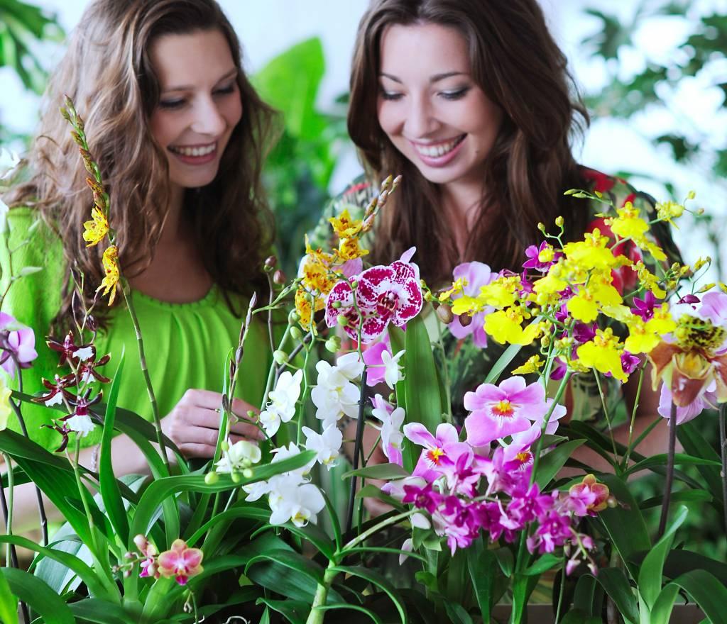 Een orchidee online kopen
