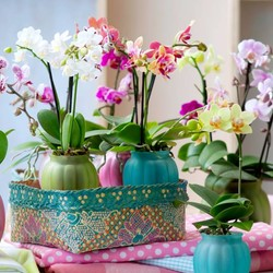Plantes à pot