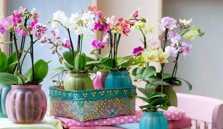 In decorative pot