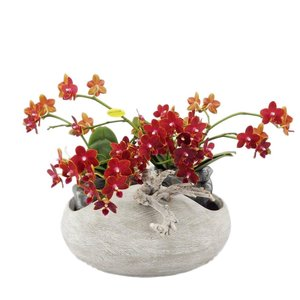 Phalaenopsis Artisto neo Beton aussehen mit acht Blumenzweige