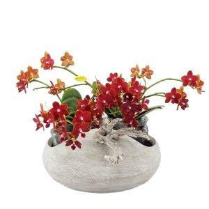 Phalaenopsis Artisto neo betonlook met 8 bloemtakken