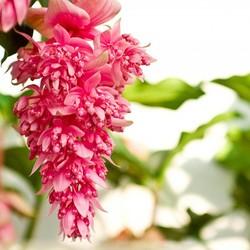 Les plantes à fleurs