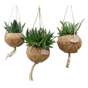 Kokodama Aloe gemengd