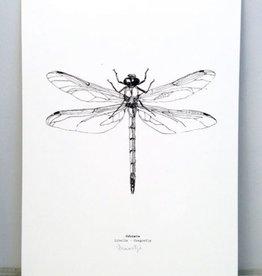 """Maartje van den Noort """"Dragonfly"""" artprint A4"""