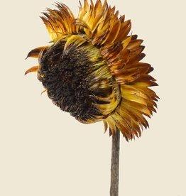 Liljebergs Everlasting Flower 30x40cm