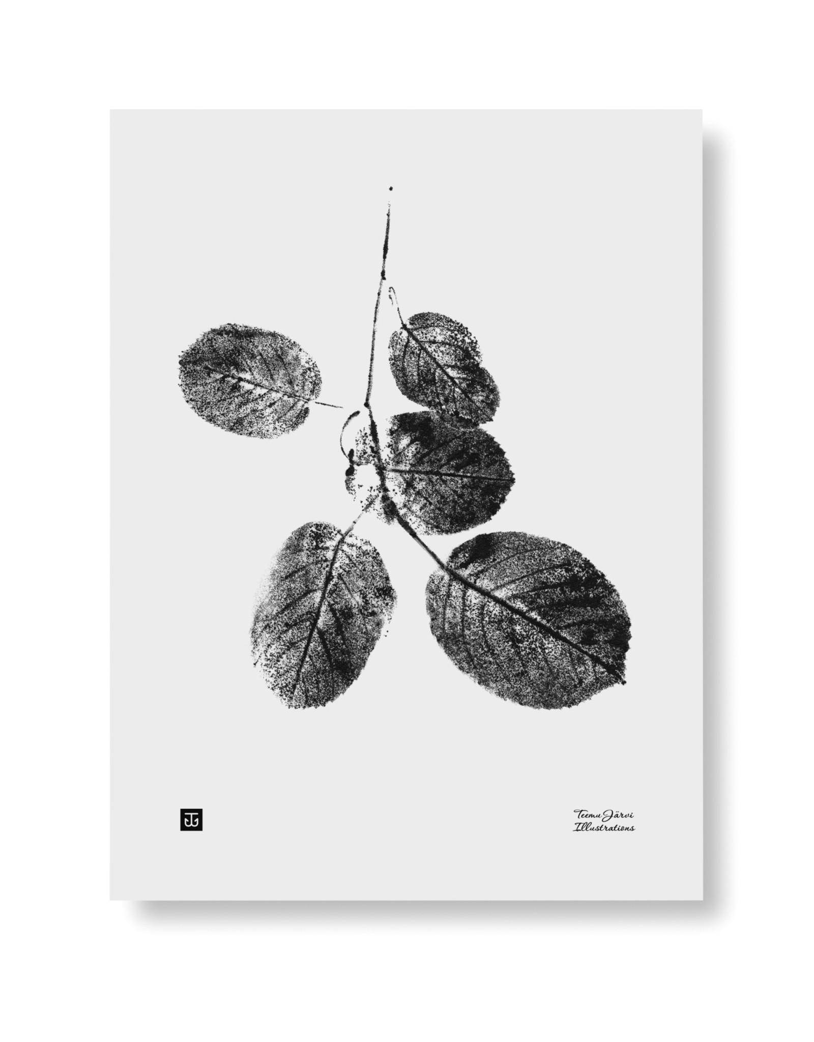 Teemu Jarvi Poster 'Goat Willow' 30x40 cm