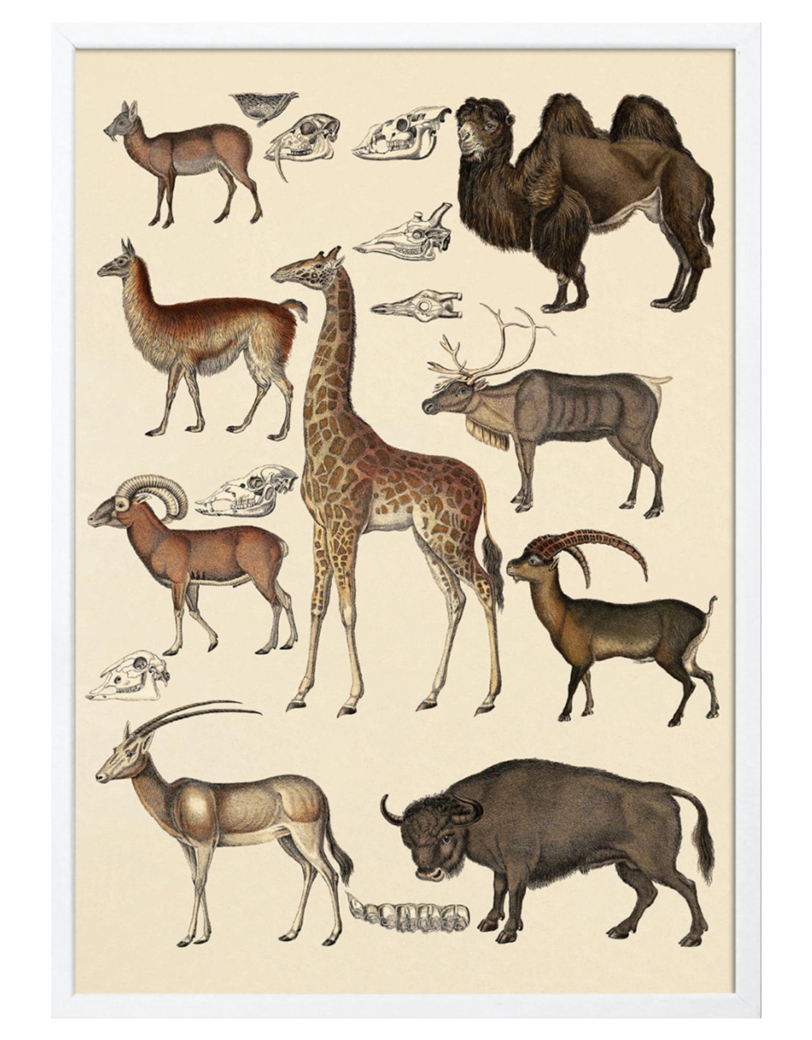 The Dybdahl & Co Animalia Giraf