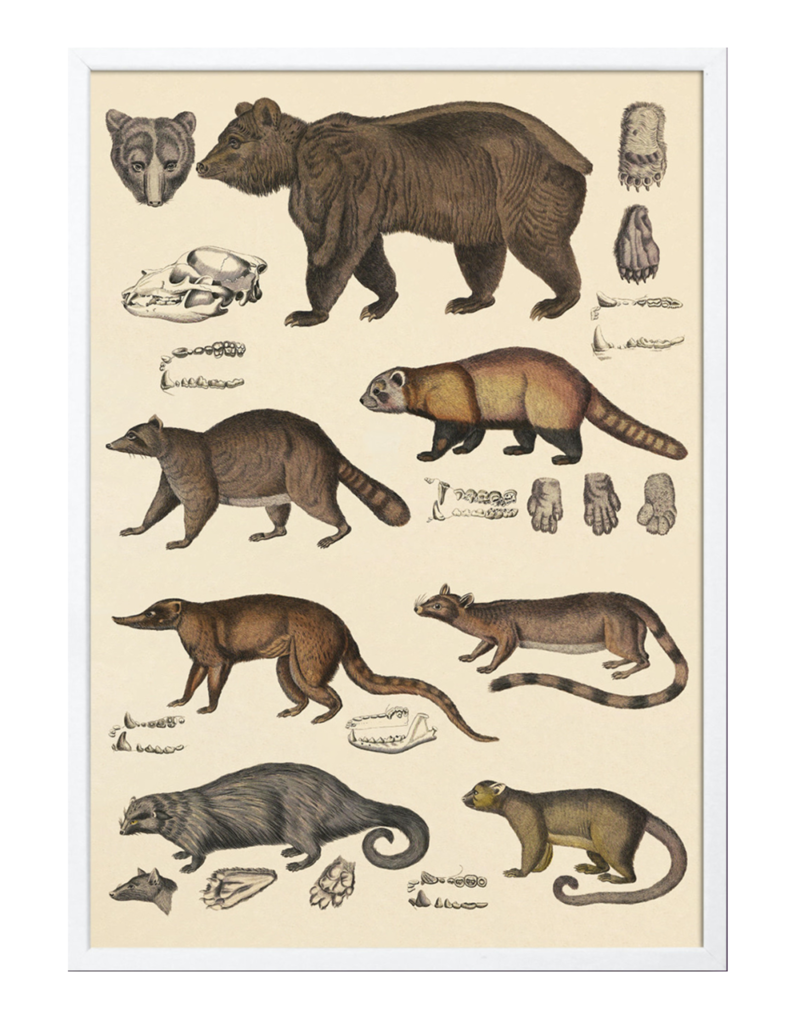 The Dybdahl & Co Animalia Bears