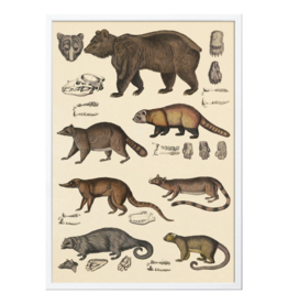The Dybdahl & Co Animalia Bears
