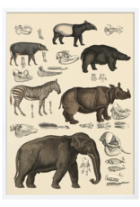 The Dybdahl & Co Animalia Africa