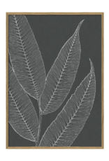 The Dybdahl & Co Poster 'Ferns ||'