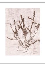 Pernille Folcarelli 'Heather' cacao 30 x 40 cm