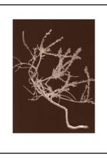 Pernille Folcarelli 'Heather'  chocolate 30 x 40 cm