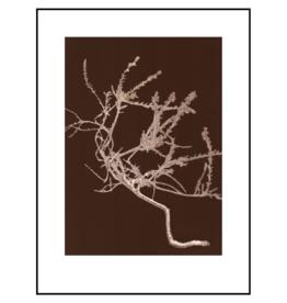 Pernille Folcarelli Poster 'Heather Chocolate'