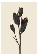 Liljebergs 'Iris' - div. maten