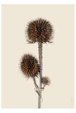Liljebergs 'Wild teasel three buds' - div. maten
