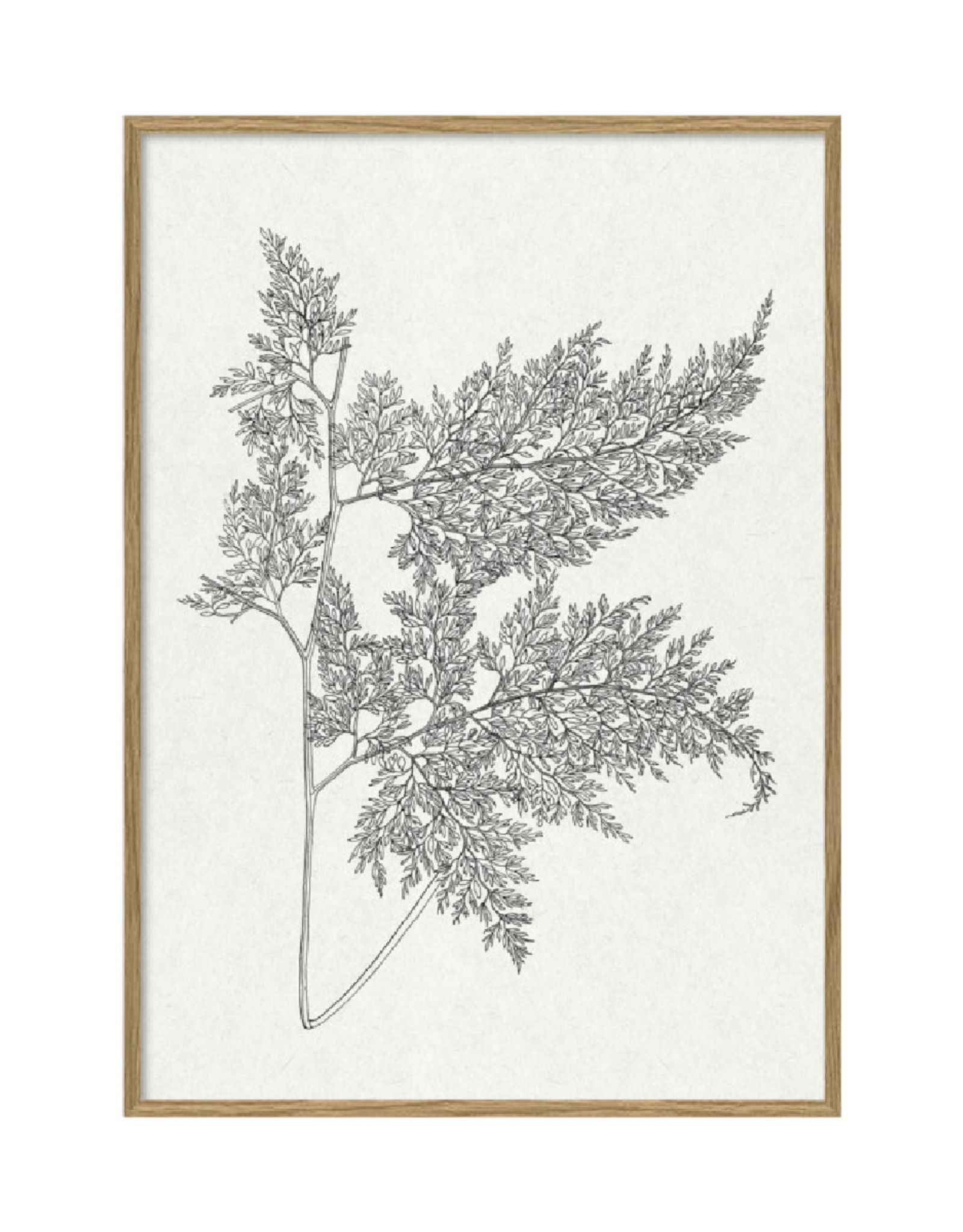 The Dybdahl & Co Poster 'Ferns |'
