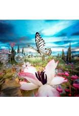 Bethany de Forest Tulip Butterfly Idea