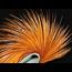 KEOUGH - Cock Neck Cape Masters