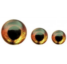 FISH SKULL - Living Eyes - Fire