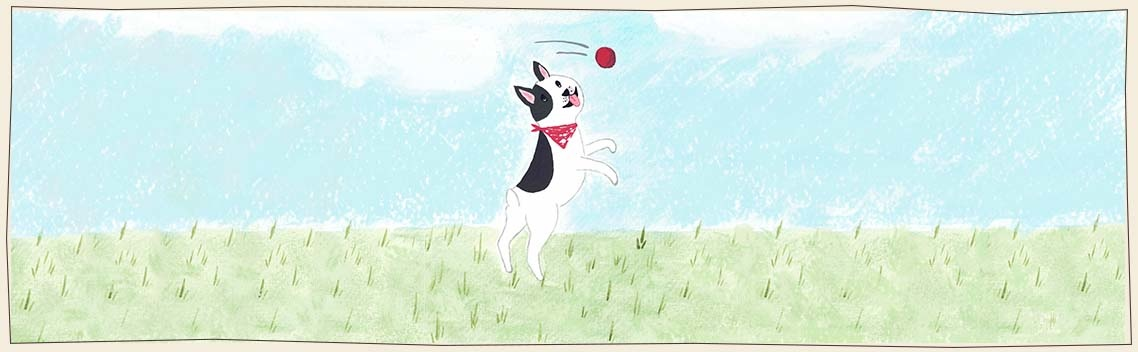 Stevige, zachte en interactieve hondenspeeltjes - Fritz & Hammy's