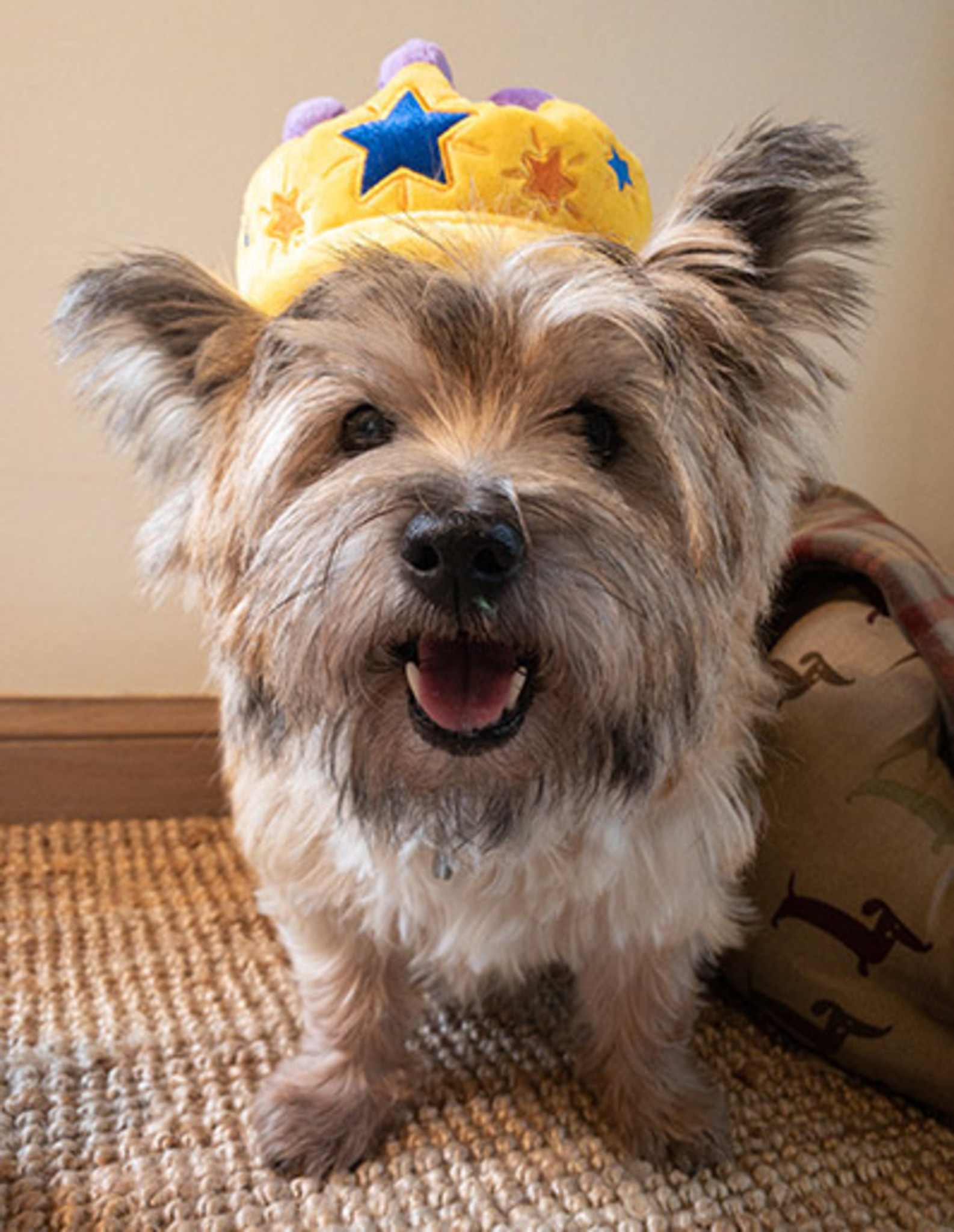 Party Time |  Canine Crown