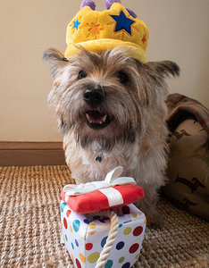 Party Time |  Pawfect Present
