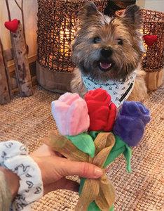 Puppy Love Boeketje  | Zacht Hondenspeelgoed