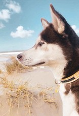 Dog Collar | Spring Yellow Checks