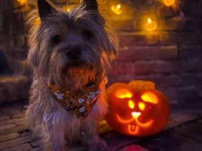 Make your Home Fall Proof with these Dog Inspired Pumpkin Carving Ideas!