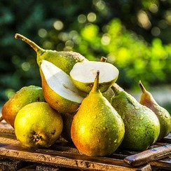 PACIFIC PEAR