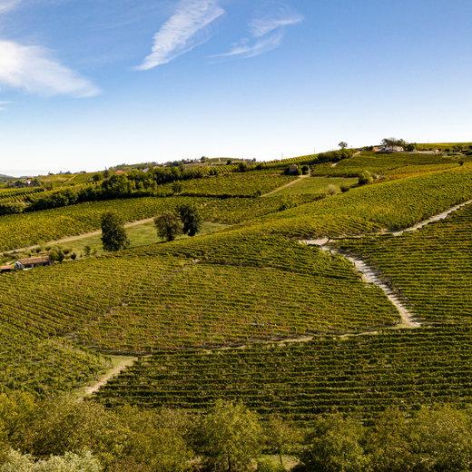 Rechtstreeks wijn bestellen bij wijnboeren uit Piemonte