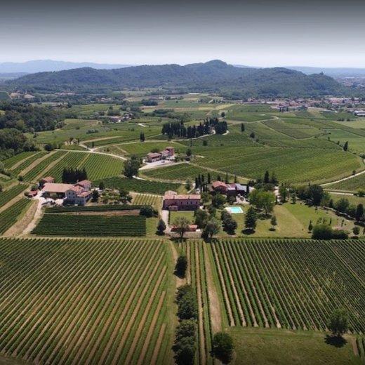 Rechtstreeks wijn bestellen bij wijnboeren uit Friuli