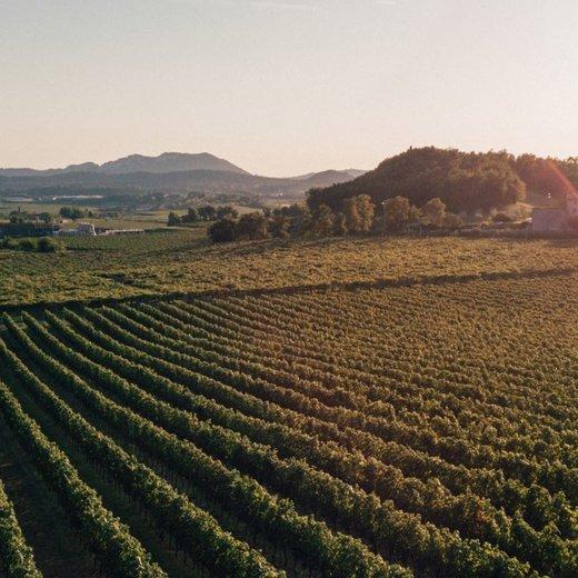 Rechtstreeks wijn bestellen bij wijnboeren uit Veneto