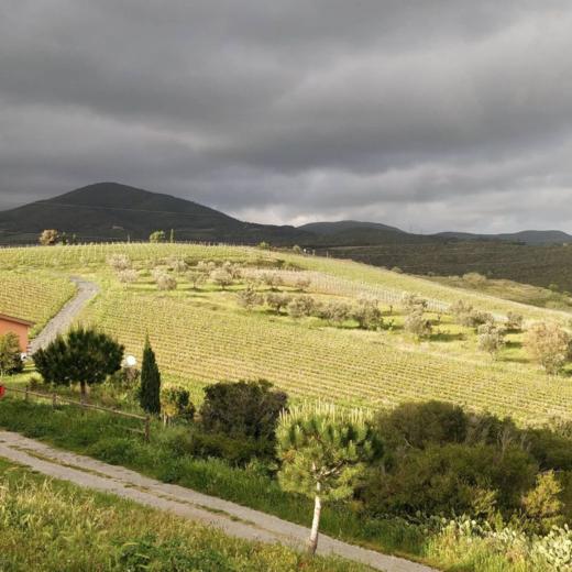 Rechtstreeks wijn bestellen bij wijnboeren uit Toscane