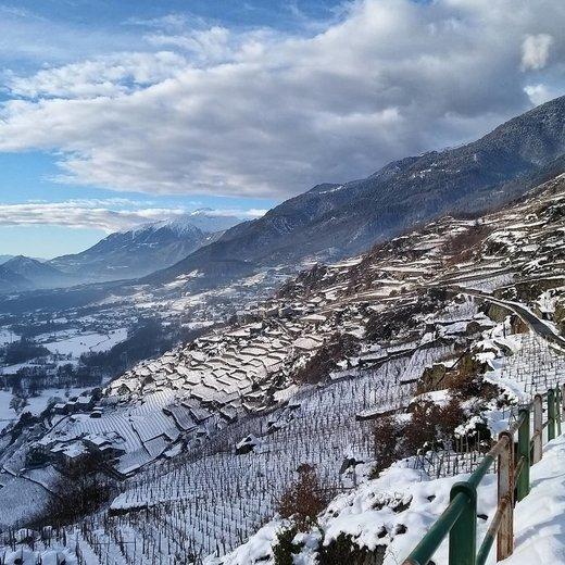 Rechtstreeks wijn bestellen bij wijnboeren uit Valtellina