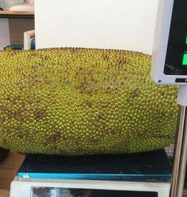 Whole Jackfruit 29.9kg (€9/kg)