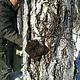 Mushrooms4Life [Inonotus obliquus] – Chaga Organic 60 capsules