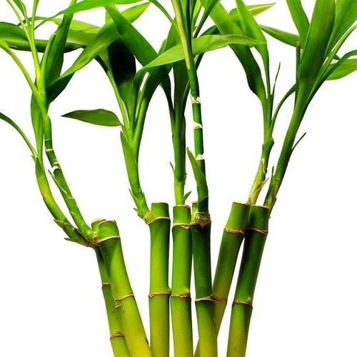 NoLizzz Bamboe handdoeken - set van 4 - Grijs - 50x90cm