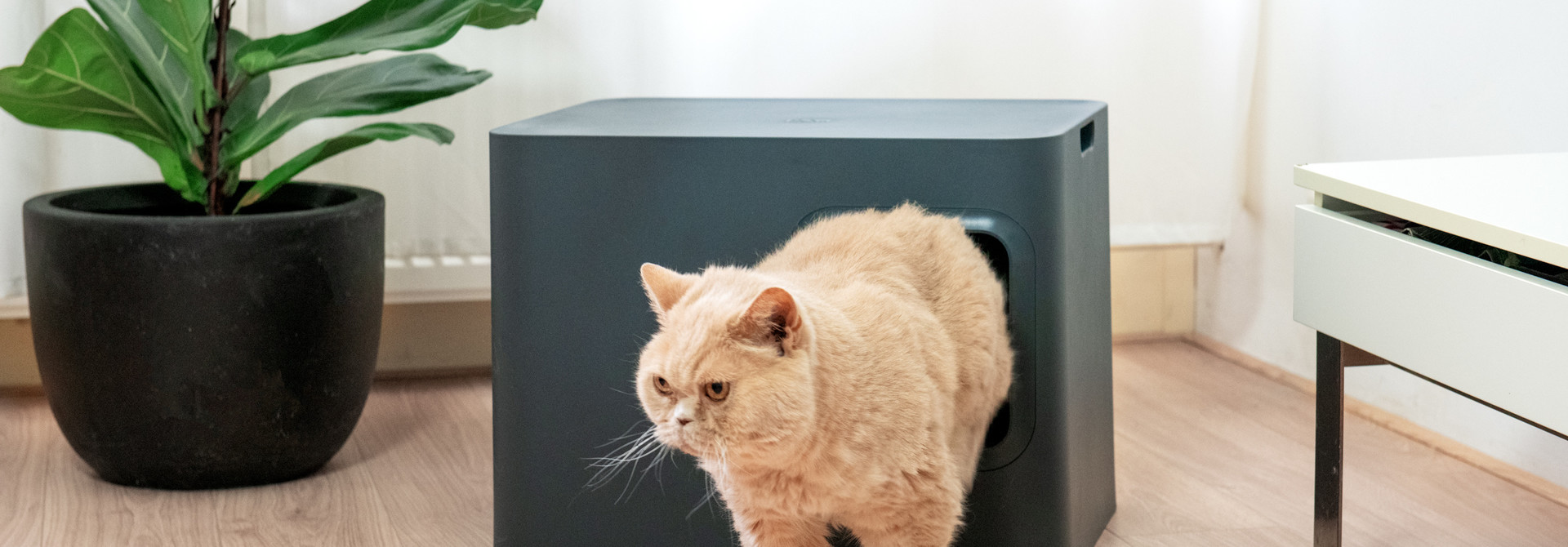 The risks of a dirty litter box at a glance