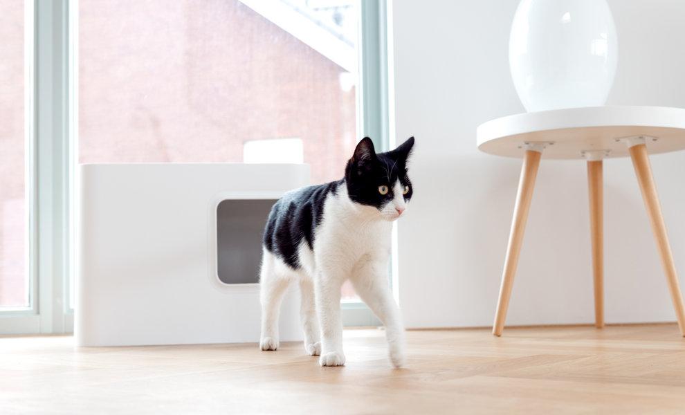 Wie verhindern Sie die Verbreitung von Katzenstreu?