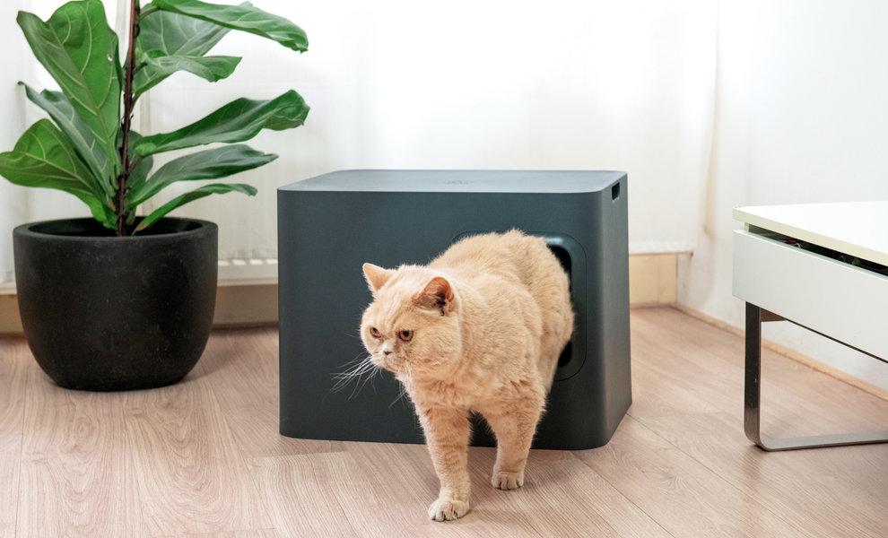 Die Risiken eines schmutzigen Katzenklos