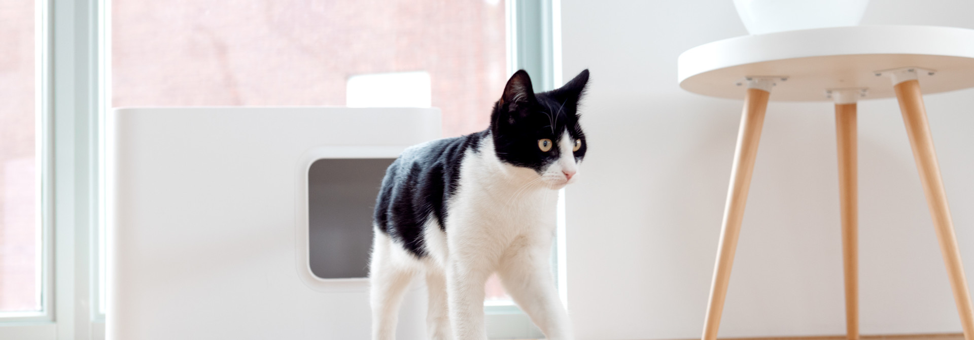 Hvordan forhindrer du spredning av kattesand?