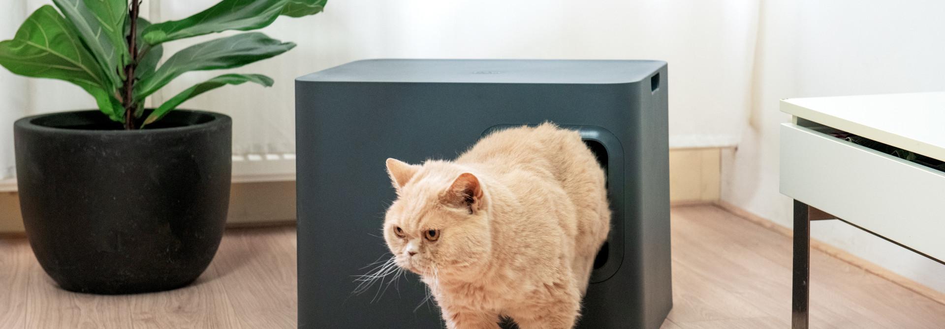 Risikoene av en skitten kattedo i en oversikt